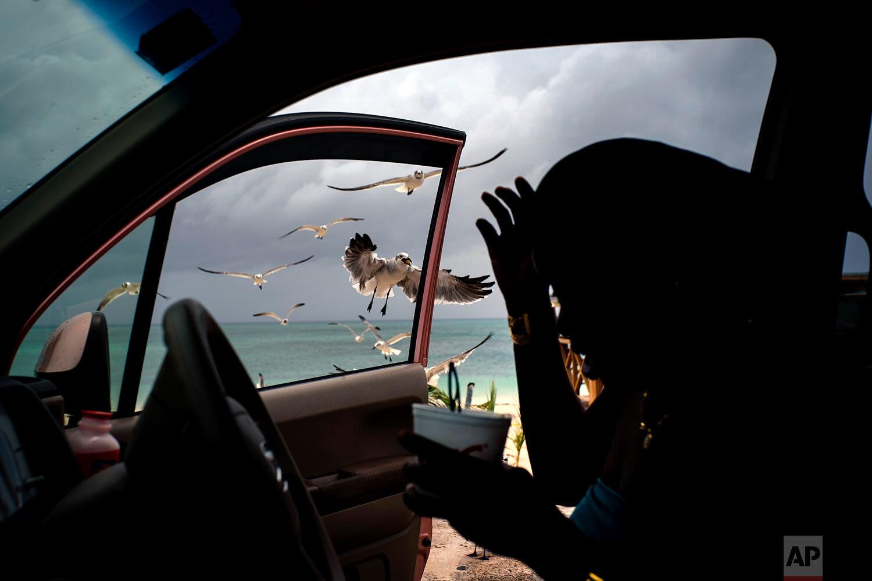 Seagulls fly toward a woman feeding them french fries from her car on Taino beach before the arrival of Hurricane Dorian in Freeport, Grand Bahama, Bahamas, Sunday, Sept. 1, 2019.  (AP Photo/Ramon Espinosa)