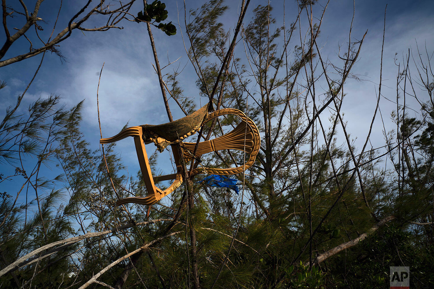 A chair is caught in a grove blown there by Hurricane Dorian's powerful winds, in Pine Bay, near Freeport, Bahamas, Wednesday, Sept. 4, 2019.  (AP Photo/Ramon Espinosa)