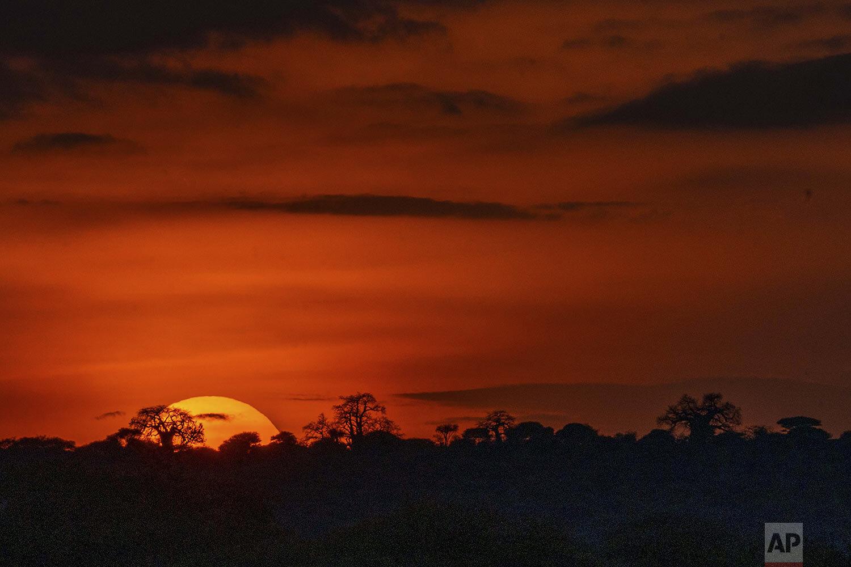 The sun sets on Tanzania's Tarangire National Park, Saturday July 6, 2019. (AP Photo/Jerome Delay)