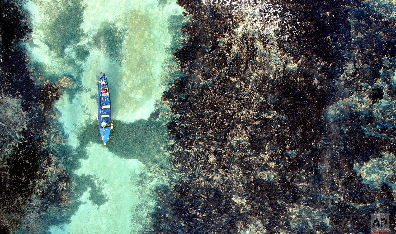 Jamaica Coral