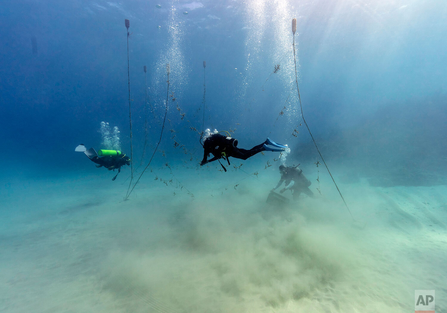 Divers, from left to right, Ray Taylor, Everton Simpson and Andrew Todd, gather coral from a coral nursery to be planted inside the White River Fish Sanctuary Tuesday, Feb. 12, 2019, in Ocho Rios, Jamaica. (AP Photo/David J. Phillip)