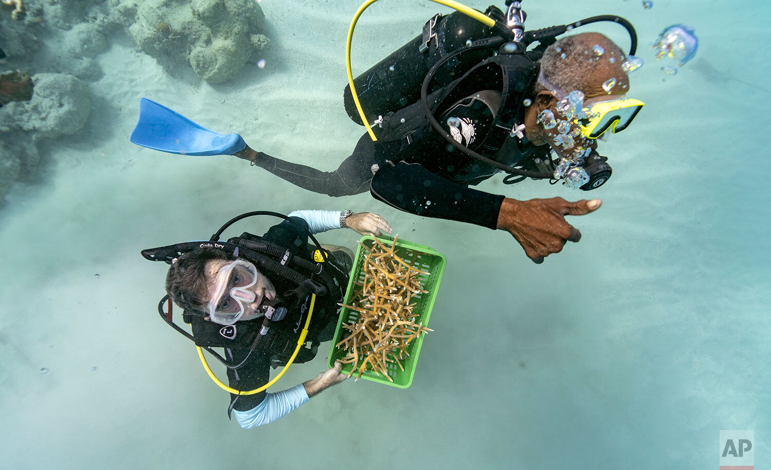 """Divers Everton Simpson, right, and Andrew Todd bring staghorn coral from a coral nursery to be planted inside the White River Fish Sanctuary Tuesday, Feb. 12, 2019, in Ocho Rios, Jamaica. When each stub grows to about the size of a human hand, Simpson collects them in a crate to individually """"transplant"""" onto a reef, a process akin to planting each blade of grass in a lawn separately. (AP Photo/David J. Phillip)"""