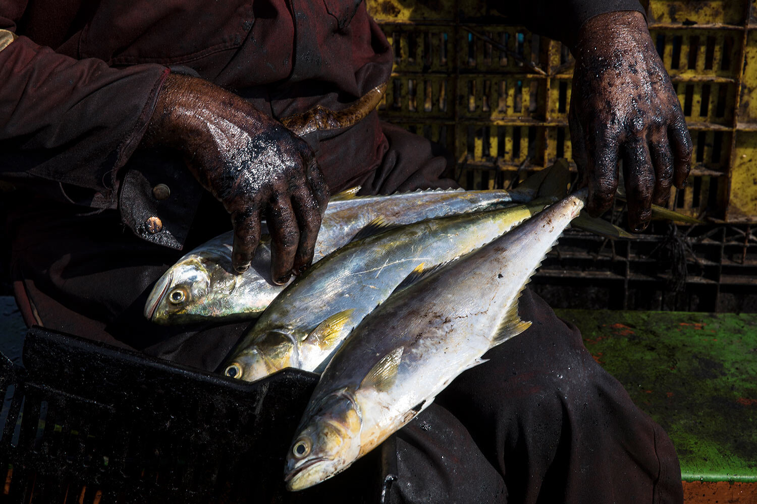 """The hands of fisherman Edward Alexander Barrios are covered in oil as he organizes bass, known as """"robalo,"""" that he caught in Lake Maracaibo as he returns home by boat in Cabimas, Venezuela, May 17, 2019. (AP Photo/Rodrigo Abd)"""