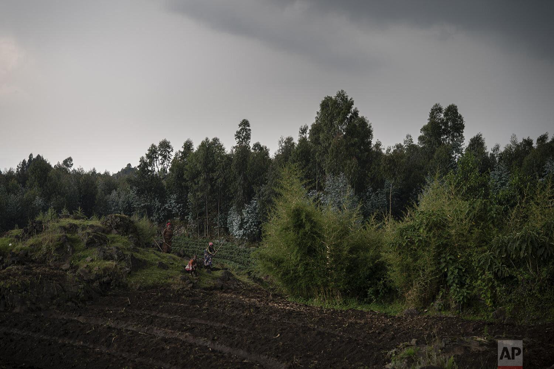 Farmers work on their land near the Volcanoes National Park in Kinigi, Rwanda. (AP Photo/Felipe Dana)