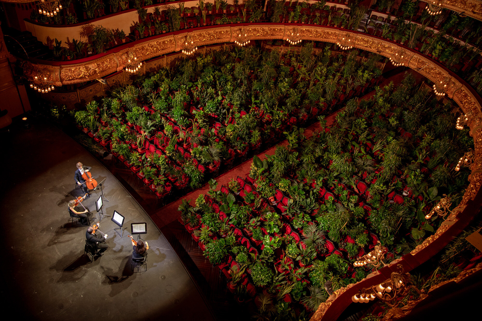 """Musicians rehears at the Gran Teatre del Liceu in Barcelona, Spain, on June 22, 2020. When the doors opened for the performance of Puccini's """"Crisantemi"""" by the UceLi Quartet, the 2,292 seats of the auditorium were occupied by plants and the performance was broadcast live online. (AP Photo/Emilio Morenatti)"""
