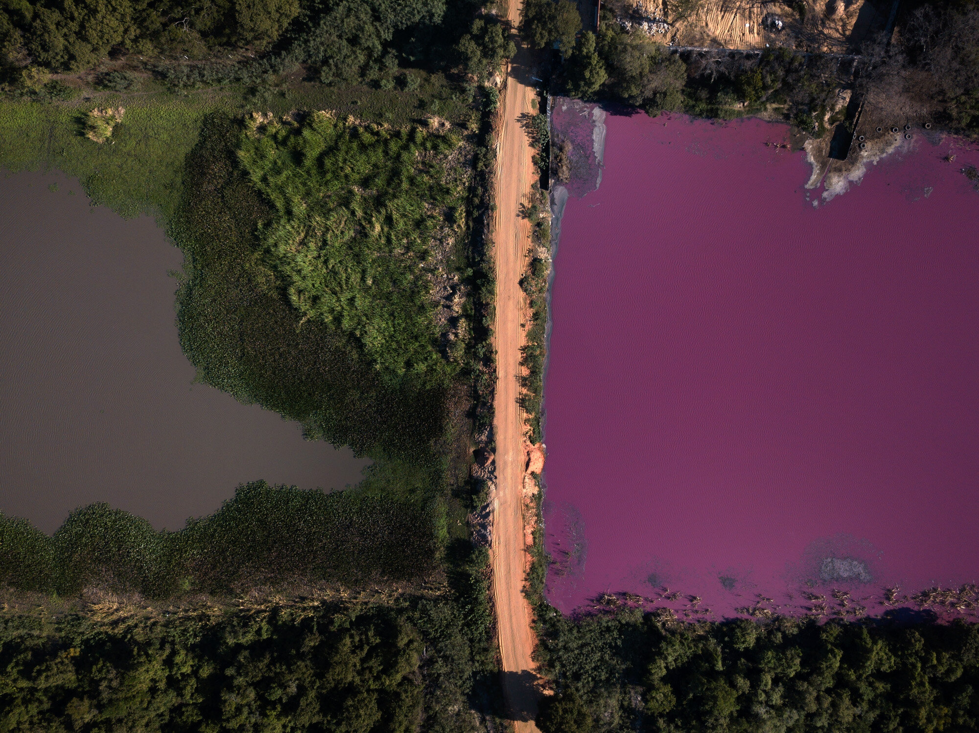 A road divides the Cerro Lagoon, where the water at right is colored and the Waltrading S.A. tannery stands on the bank, top right, in Limpio, Paraguay, on Aug. 5, 2020. According to Francisco Ferreira, a technician at the National University Multidisciplinary Lab, the color of the water is due to the presence of heavy metals like chromium, commonly used in the tannery process. (AP Photo/Jorge Saenz)
