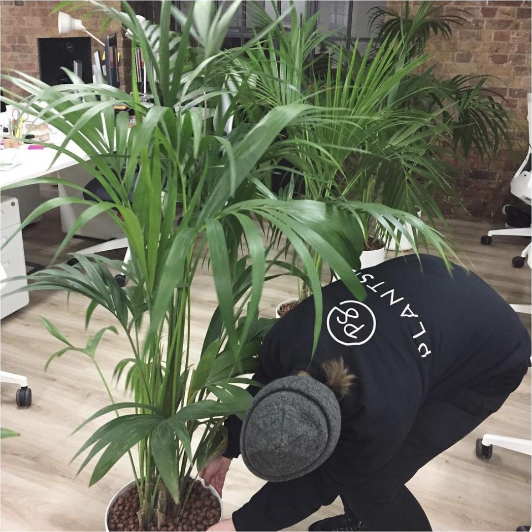 About_Plant_Sit