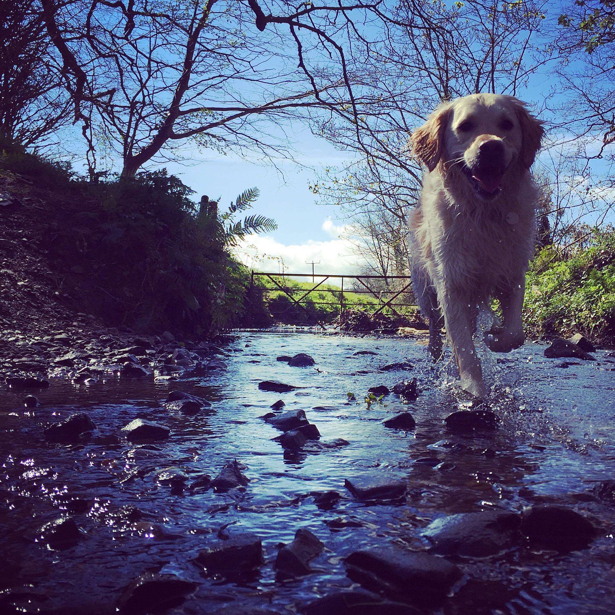 river_bridge_happy_dog_country_helens_bay_to_crawfordsburn_roadtrip_coast_ni_explorer_niexplorer_northern_ireland_blog.jpg