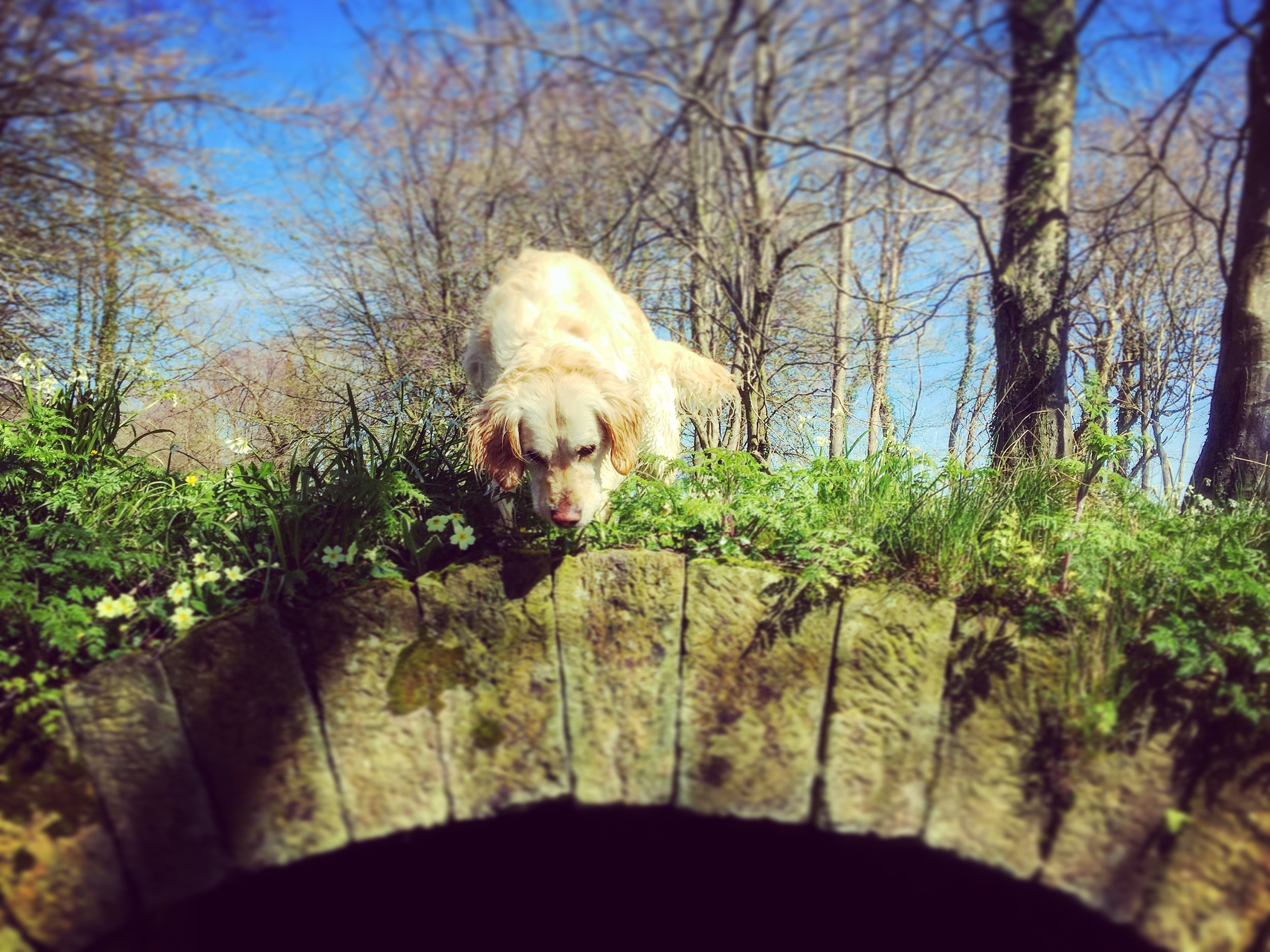 bridge_happy_dog_country_helens_bay_to_crawfordsburn_roadtrip_coast_ni_explorer_niexplorer_northern_ireland_blog.jpg