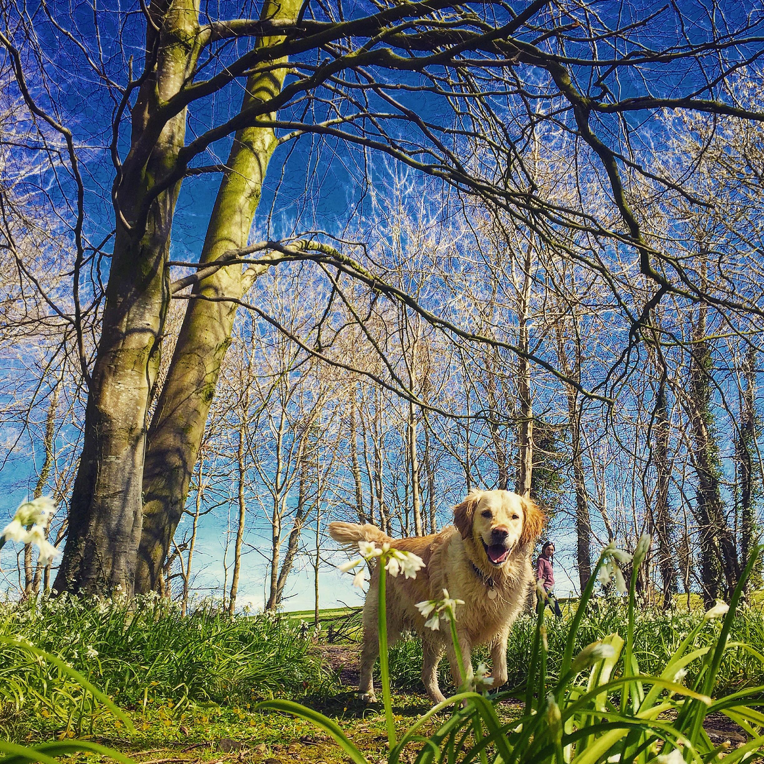 happy_dog_country_helens_bay_to_crawfordsburn_roadtrip_coast_ni_explorer_niexplorer_northern_ireland_blog.jpg