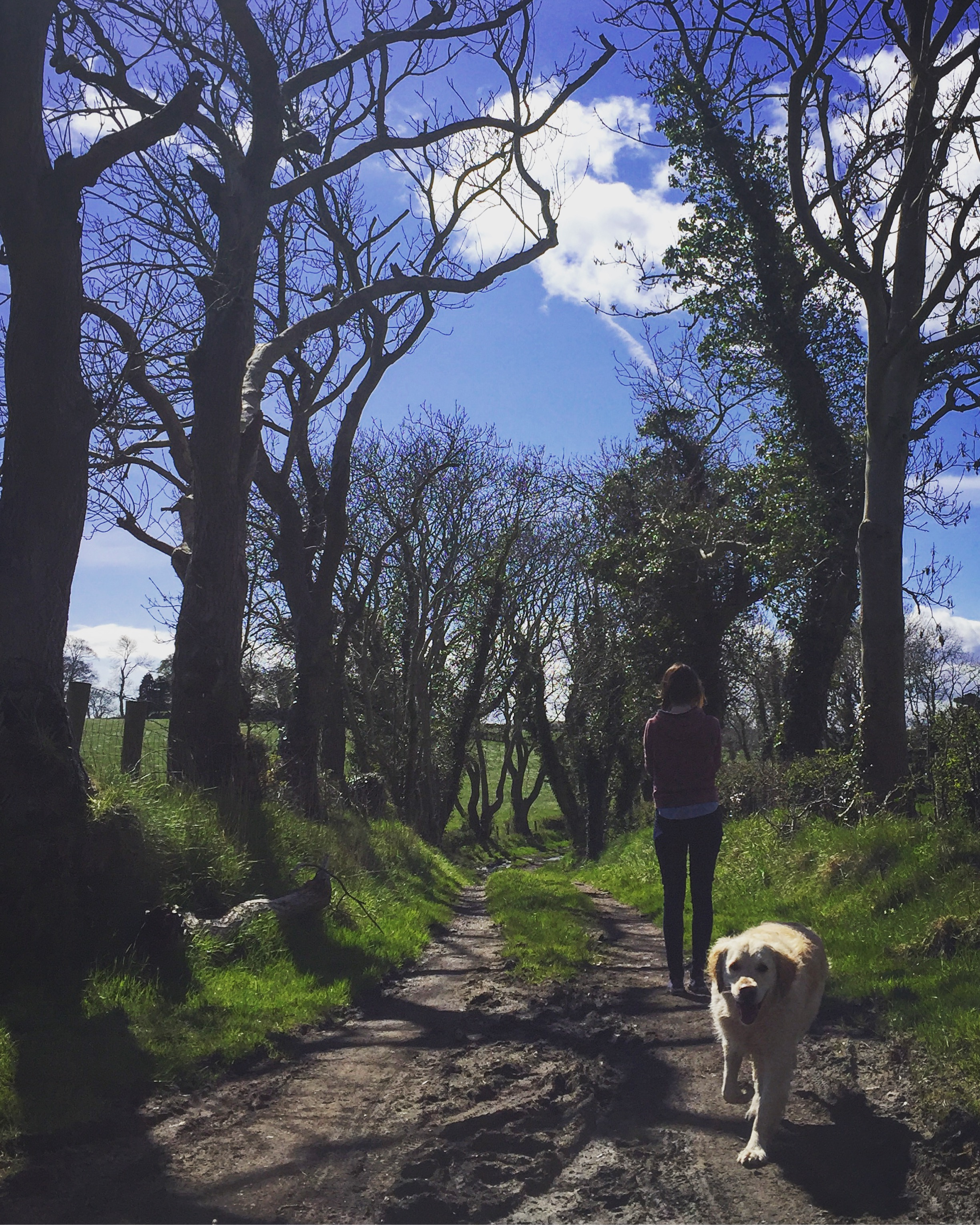 lane_country_helens_bay_to_crawfordsburn_roadtrip_coast_ni_explorer_niexplorer_northern_ireland_blog.jpg