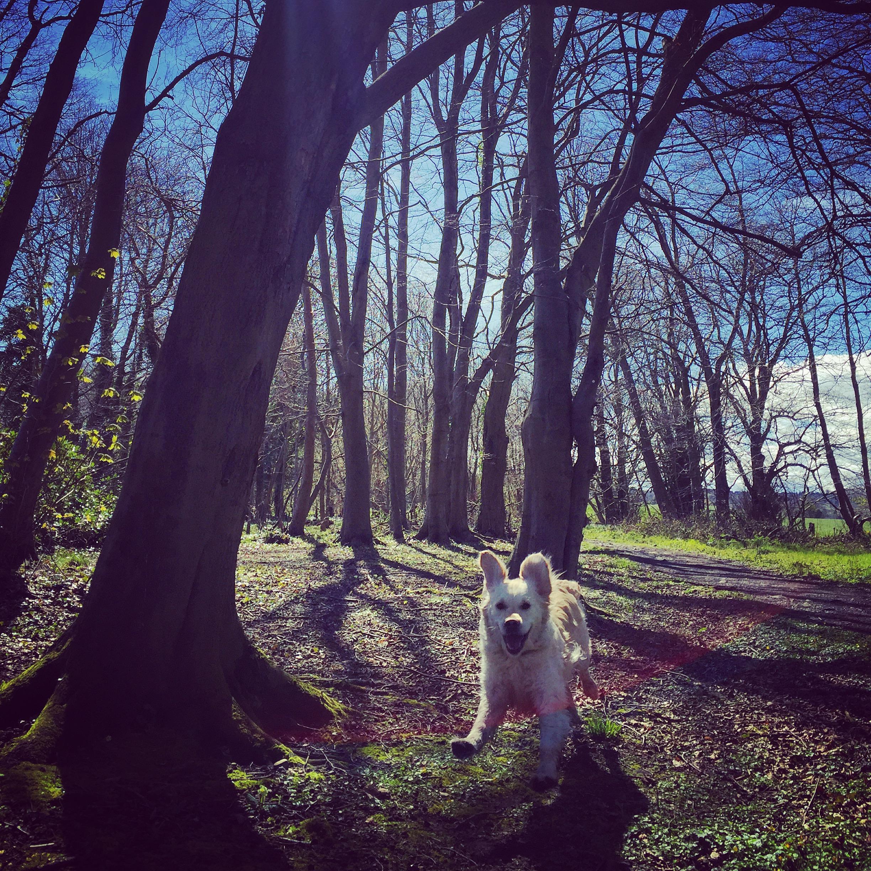 running_dog_helens_bay_to_crawfordsburn_roadtrip_coast_ni_explorer_niexplorer_northern_ireland_blog.jpg