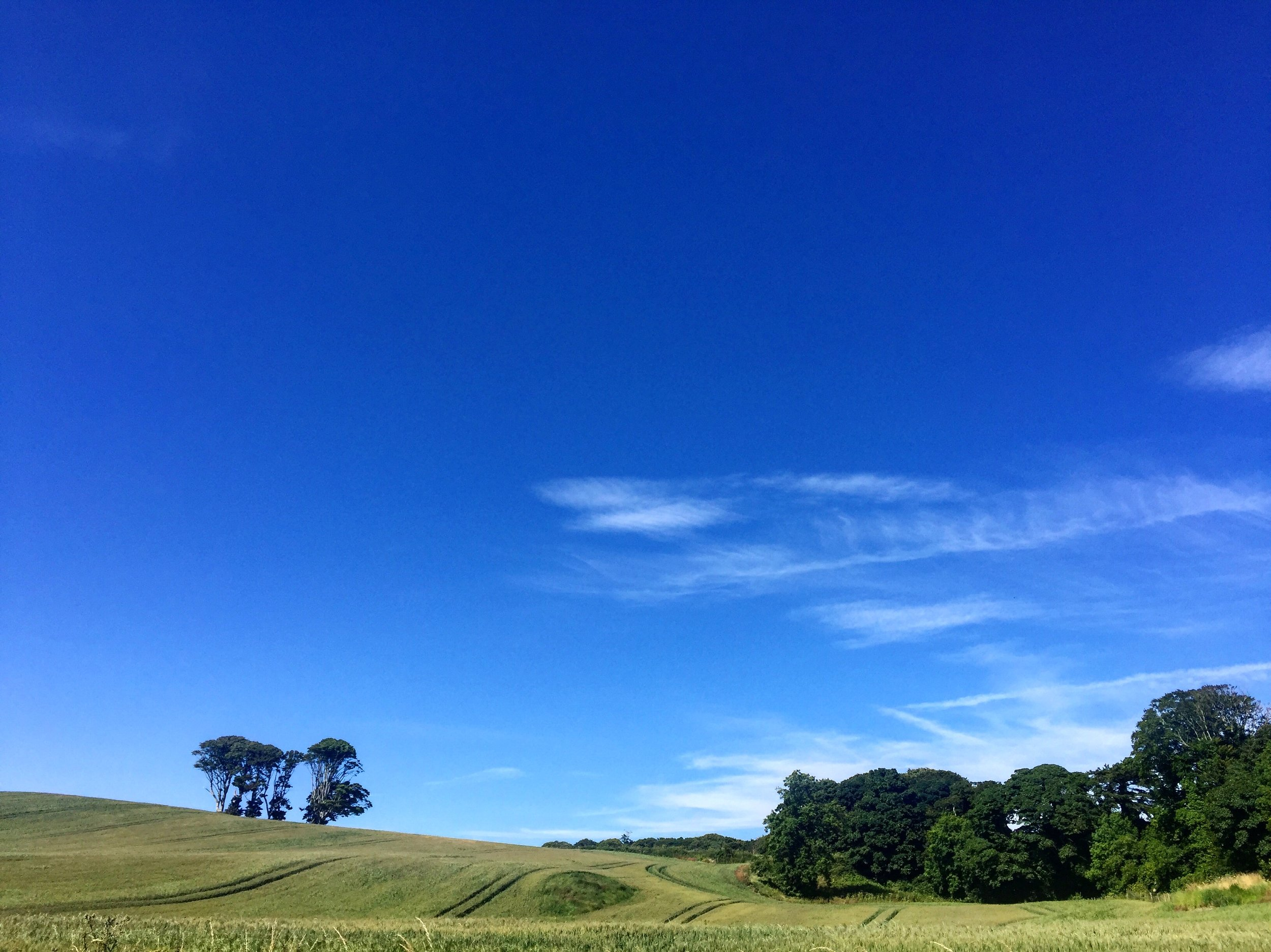blue_sky_portaferry_trees_fields_strangford_lough_Ards_peninsula_ni_explorer_niexplorer_northern_ireland_blog.jpg