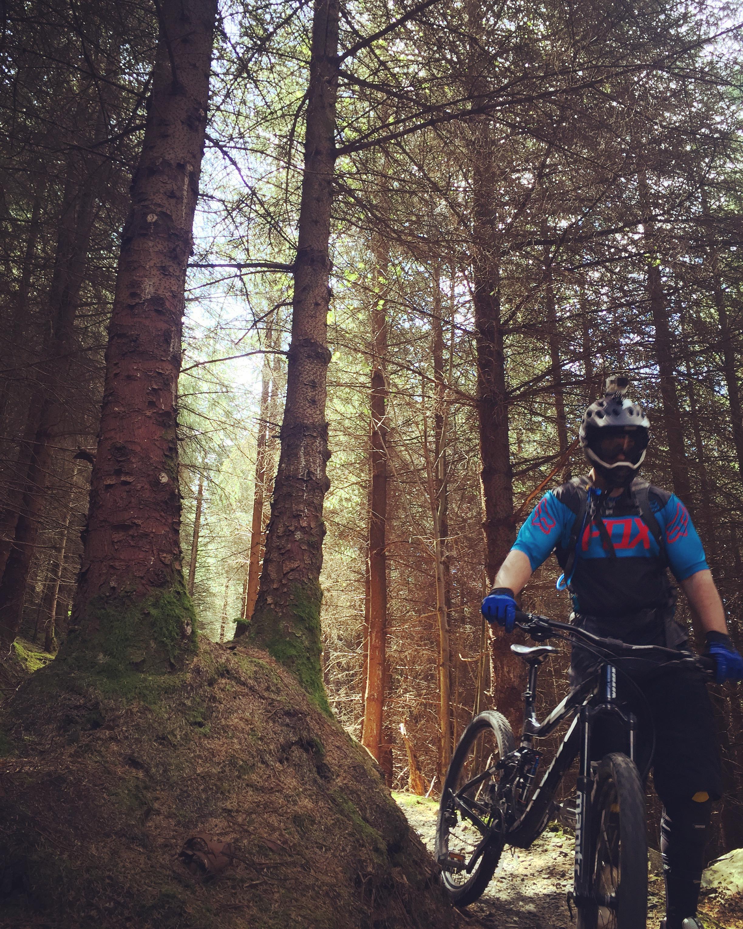 silhouettes_trees_kilbroney_forest_trails_rostrevor_mtb_mountainbiking_ni_explorer_niexplorer_northern_ireland_blog.jpg