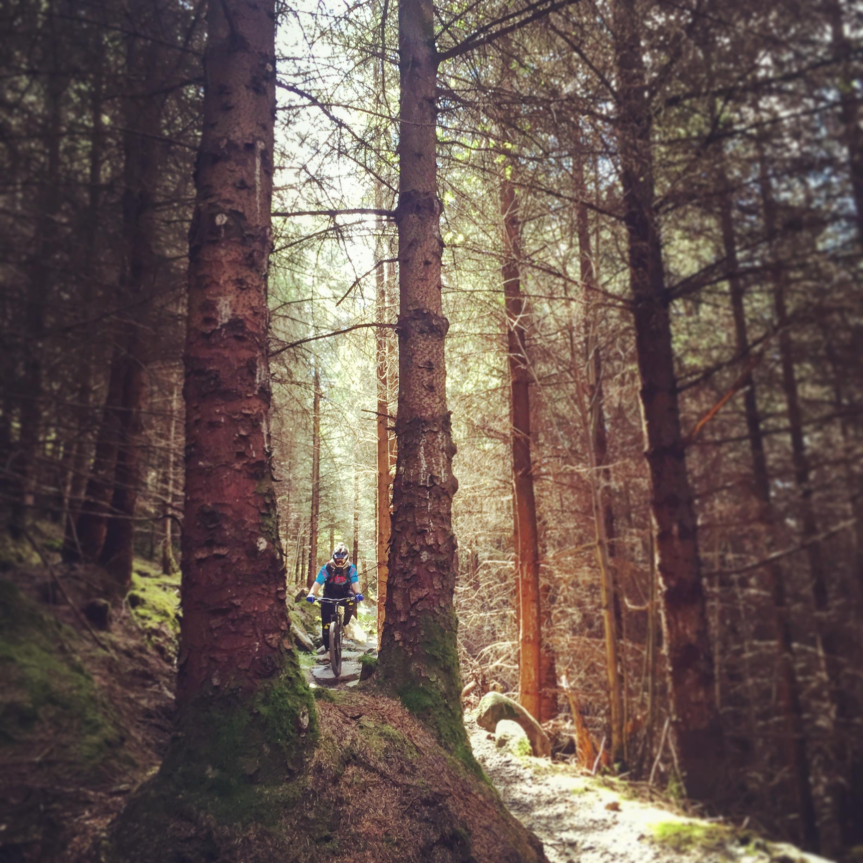 trees_kilbroney_forest_trails_rostrevor_mtb_mountainbiking_ni_explorer_niexplorer_northern_ireland_blog.jpg