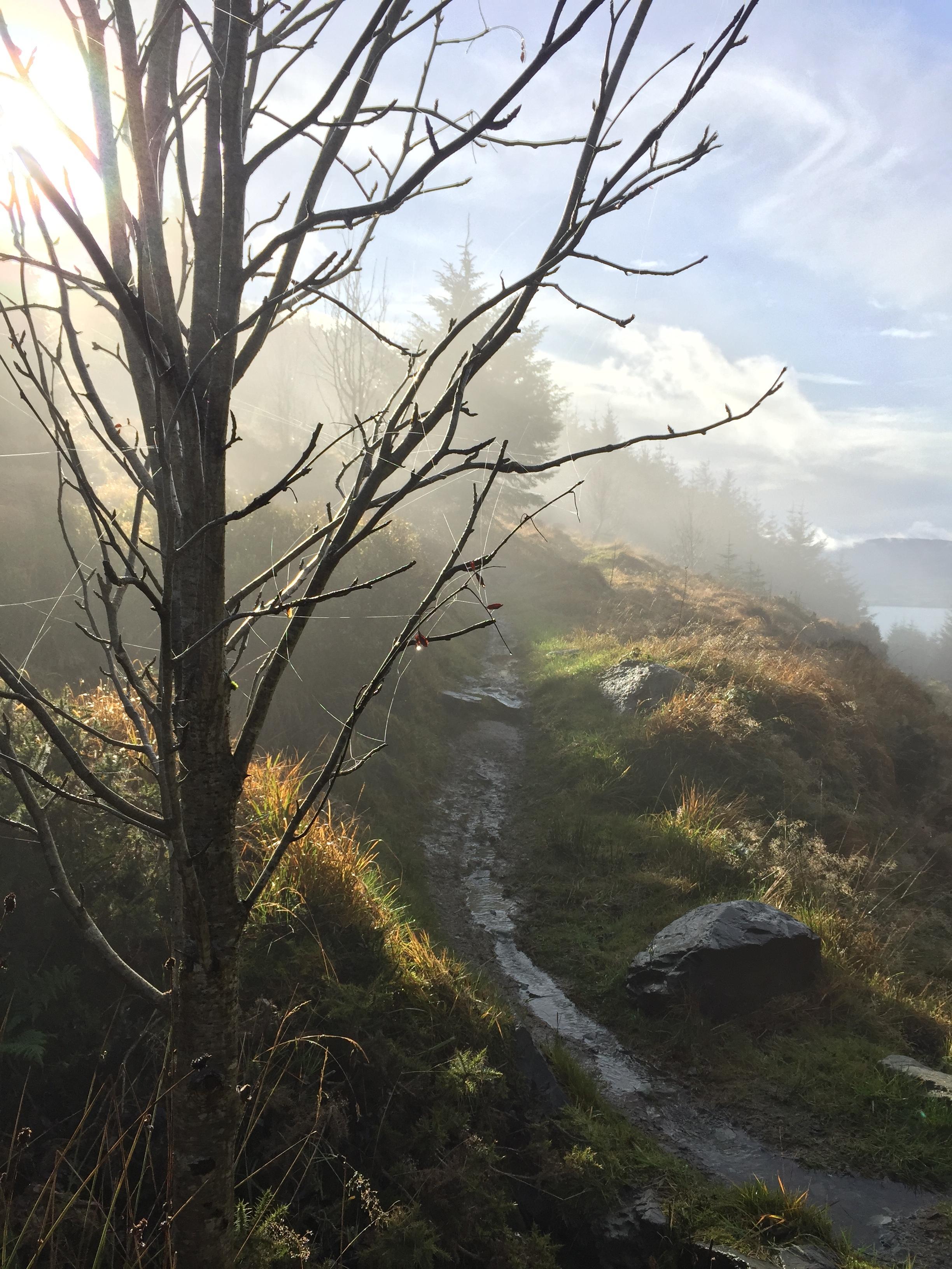 wet_rain_trees_kilbroney_forest_trails_rostrevor_mtb_mountainbiking_ni_explorer_niexplorer_northern_ireland_blog.jpg