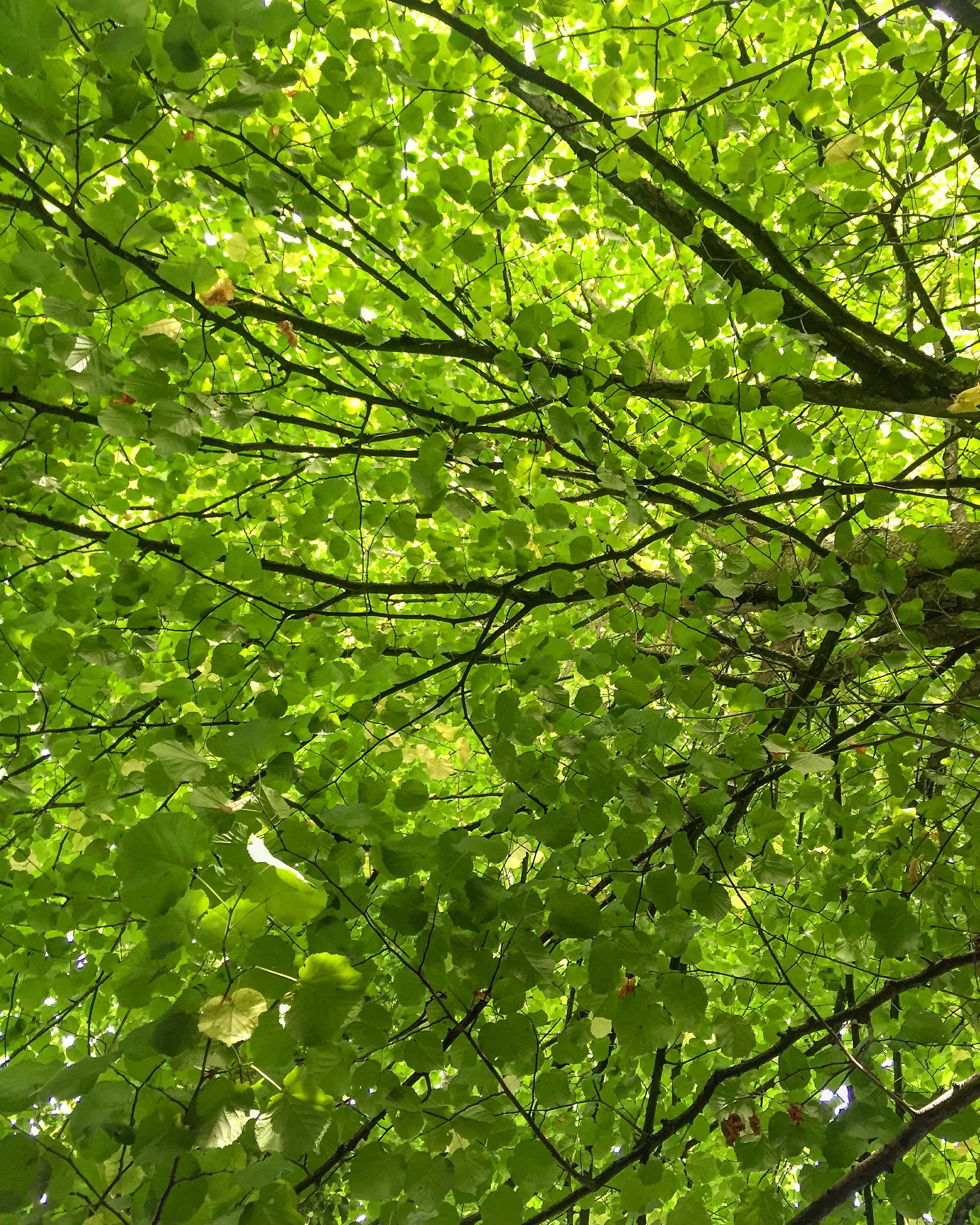 trees_Antrim_castle_gardens_antrim_northern_ireland_ni_explorer_niexplorer.jpg