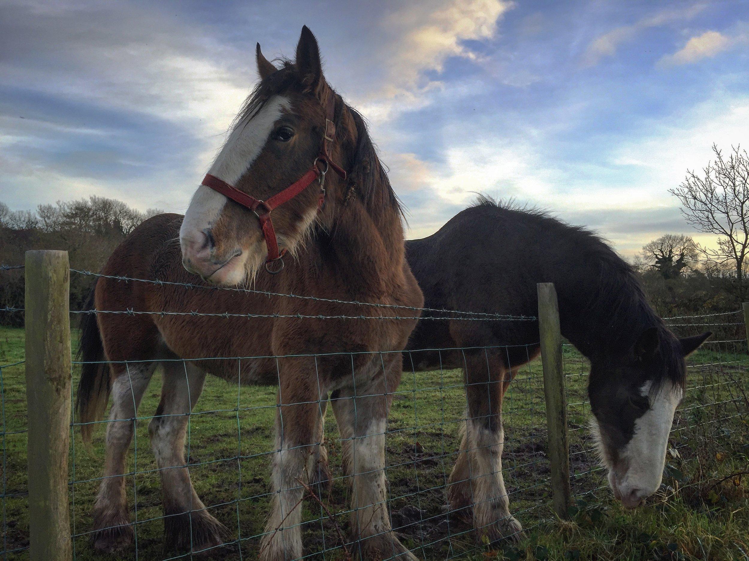 horses_kinbane_head_castle_northern_ireland_niexplorer_ni_explorer.jpg