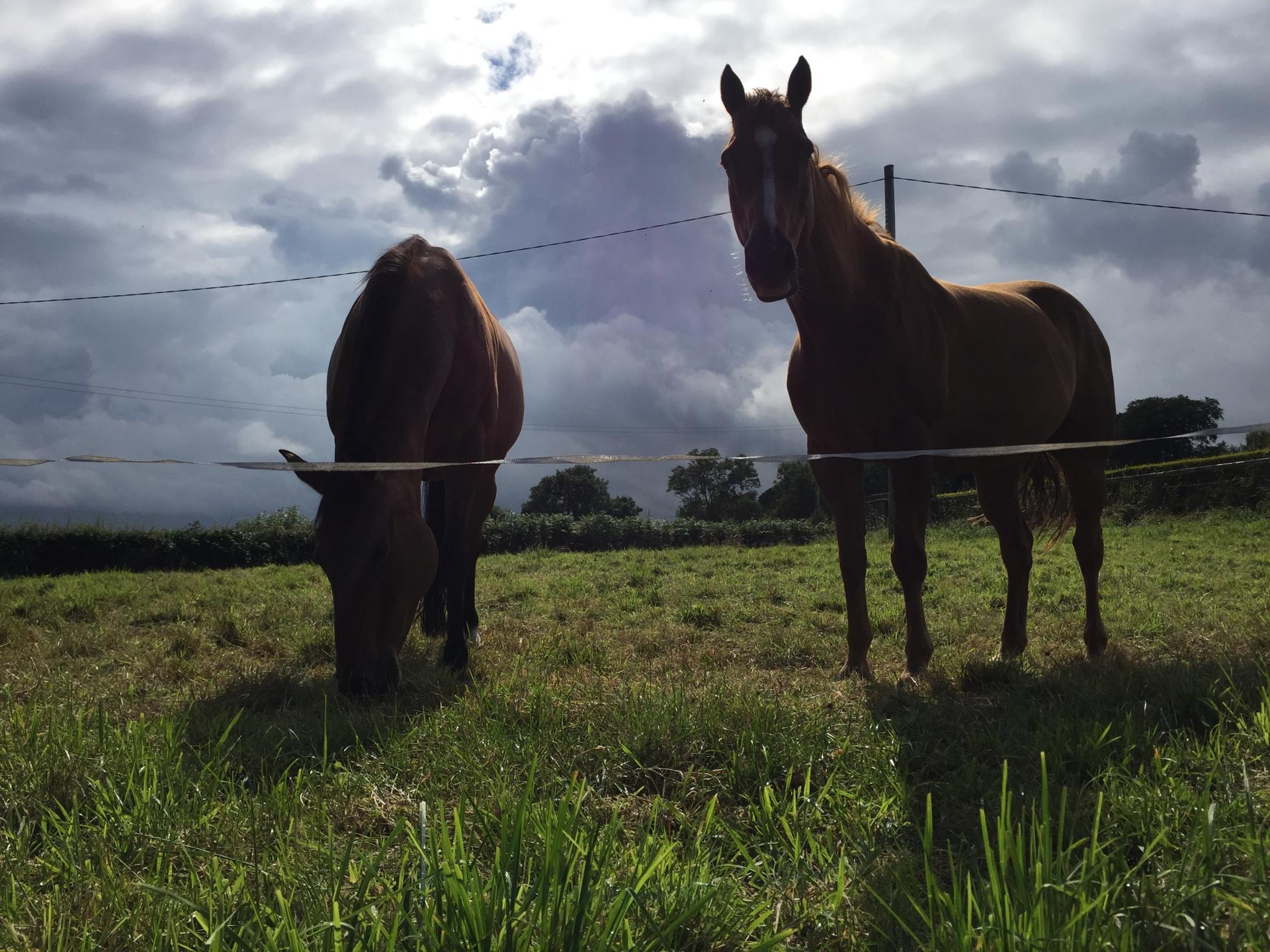 delamont_country_park_dexter_ni_explorer_niexplorer_newry_mourne_northern_ireland (28).jpg