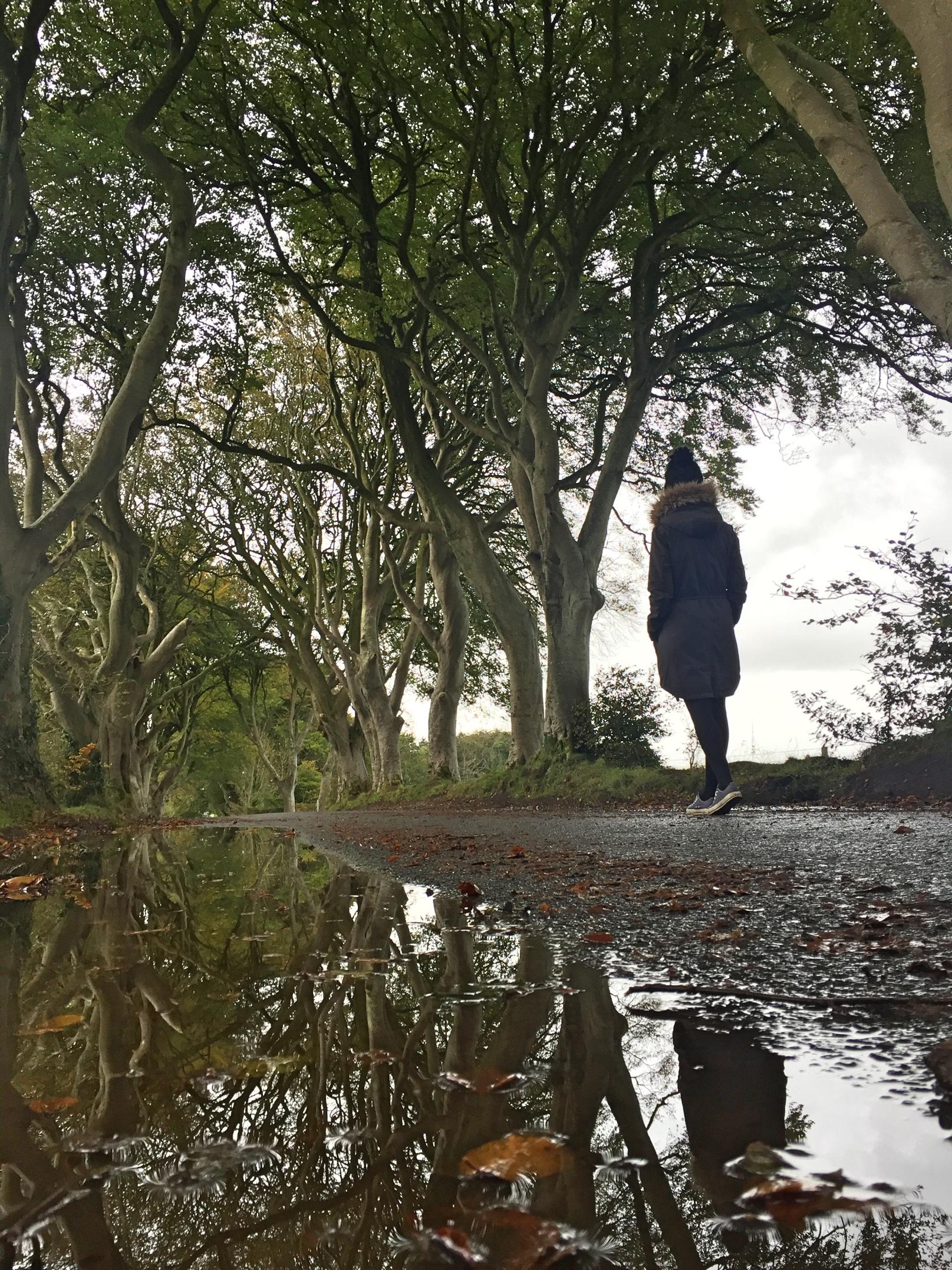 dark_hedges_darkhedges_northern_ireland_niexplorer_ni_explorer (1).jpg