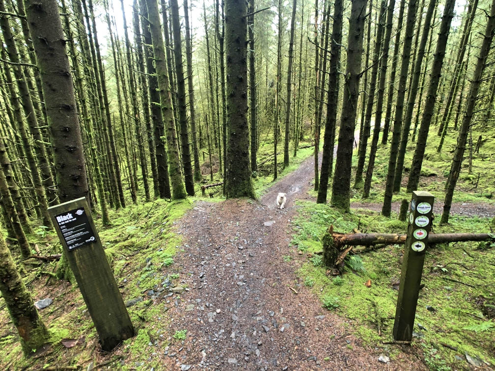 ni_explorer_davagh_forest_mountain_biking_northern_ireland (15).jpg