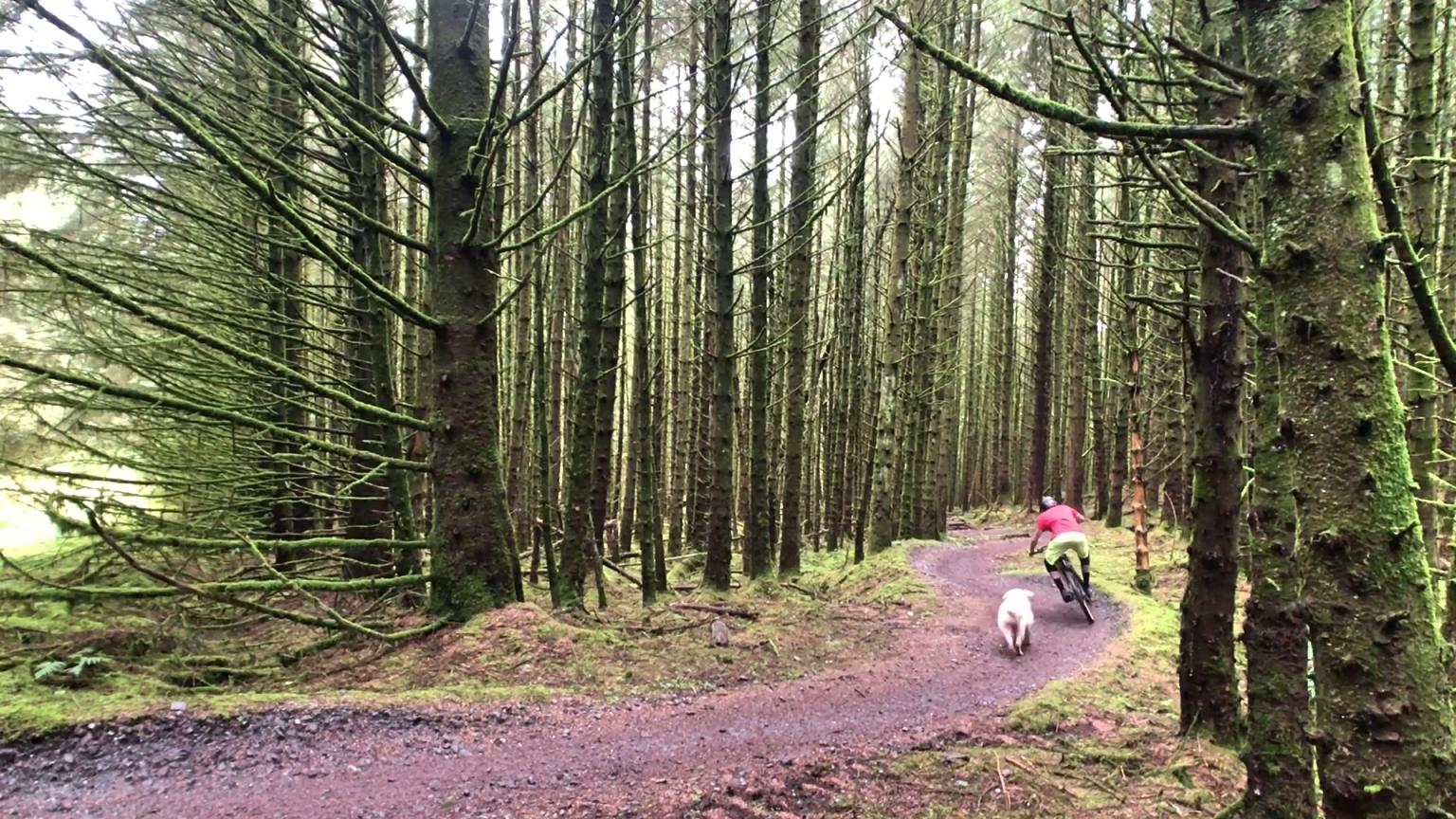 ni_explorer_davagh_forest_mountain_biking_northern_ireland (5).jpg