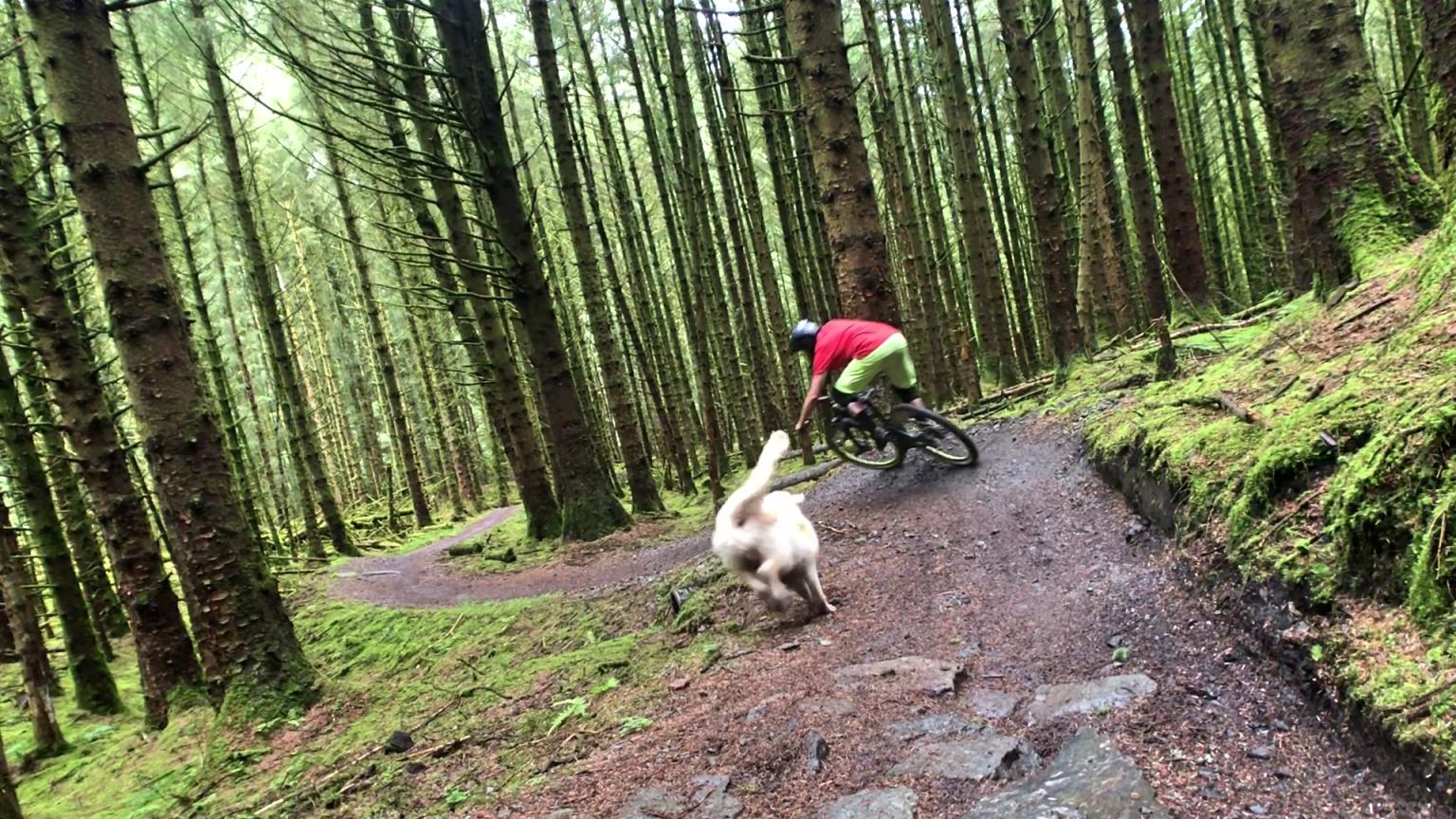 ni_explorer_davagh_forest_mountain_biking_northern_ireland (3).jpg