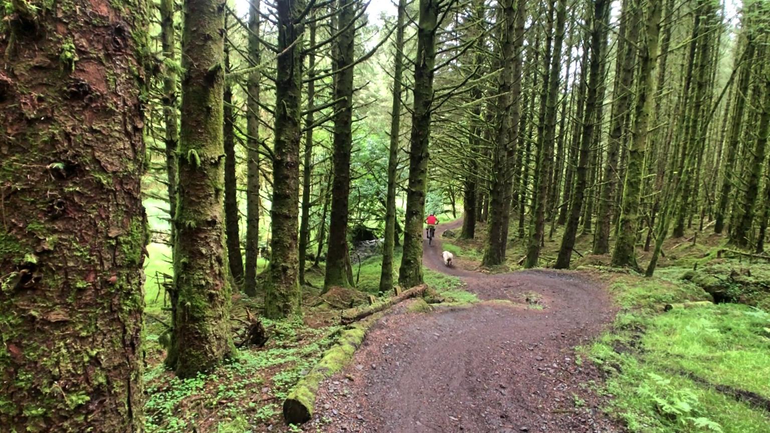 ni_explorer_davagh_forest_mountain_biking_northern_ireland (7).jpg