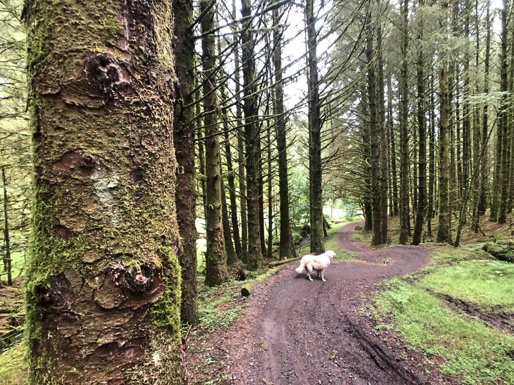 ni_explorer_davagh_forest_mountain_biking_northern_ireland (16).jpg