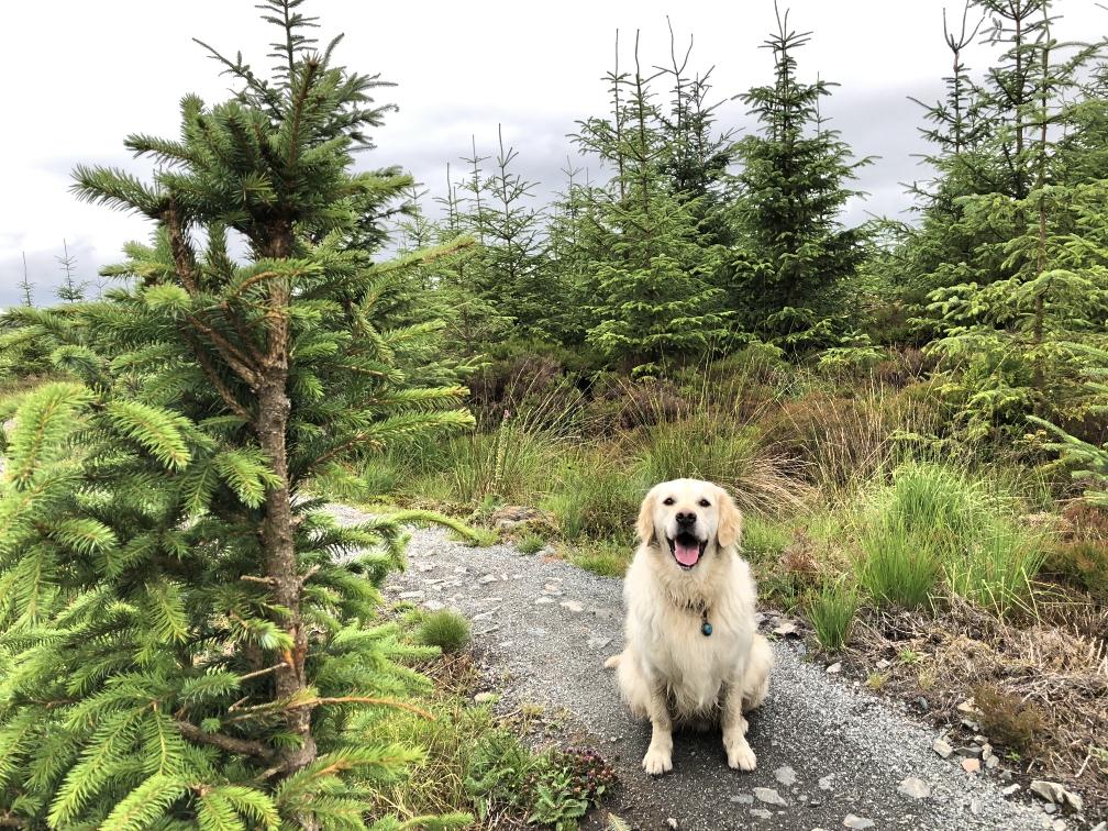 ni_explorer_davagh_forest_mountain_biking_northern_ireland (22).jpg