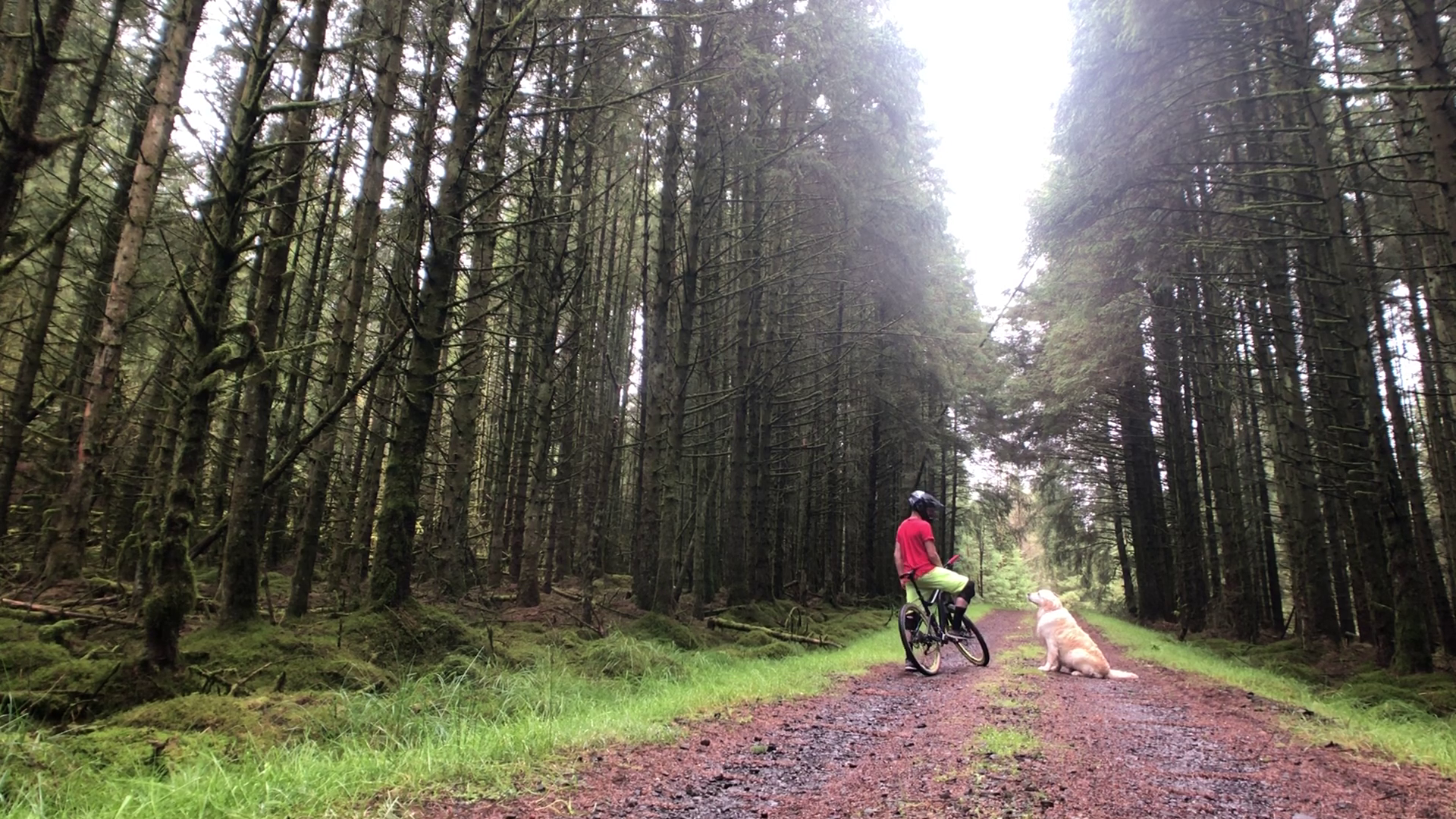 DAVAGH FOREST -