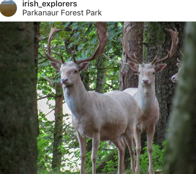 best_of_northern_ireland_fan_pic_friday (46).png