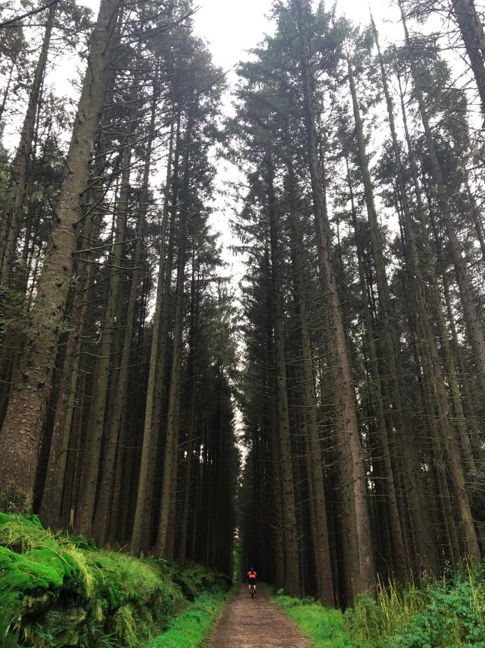 rostrevor-kilbroney-forest-county-down-mountainbiking-northern-ireland (2).jpg