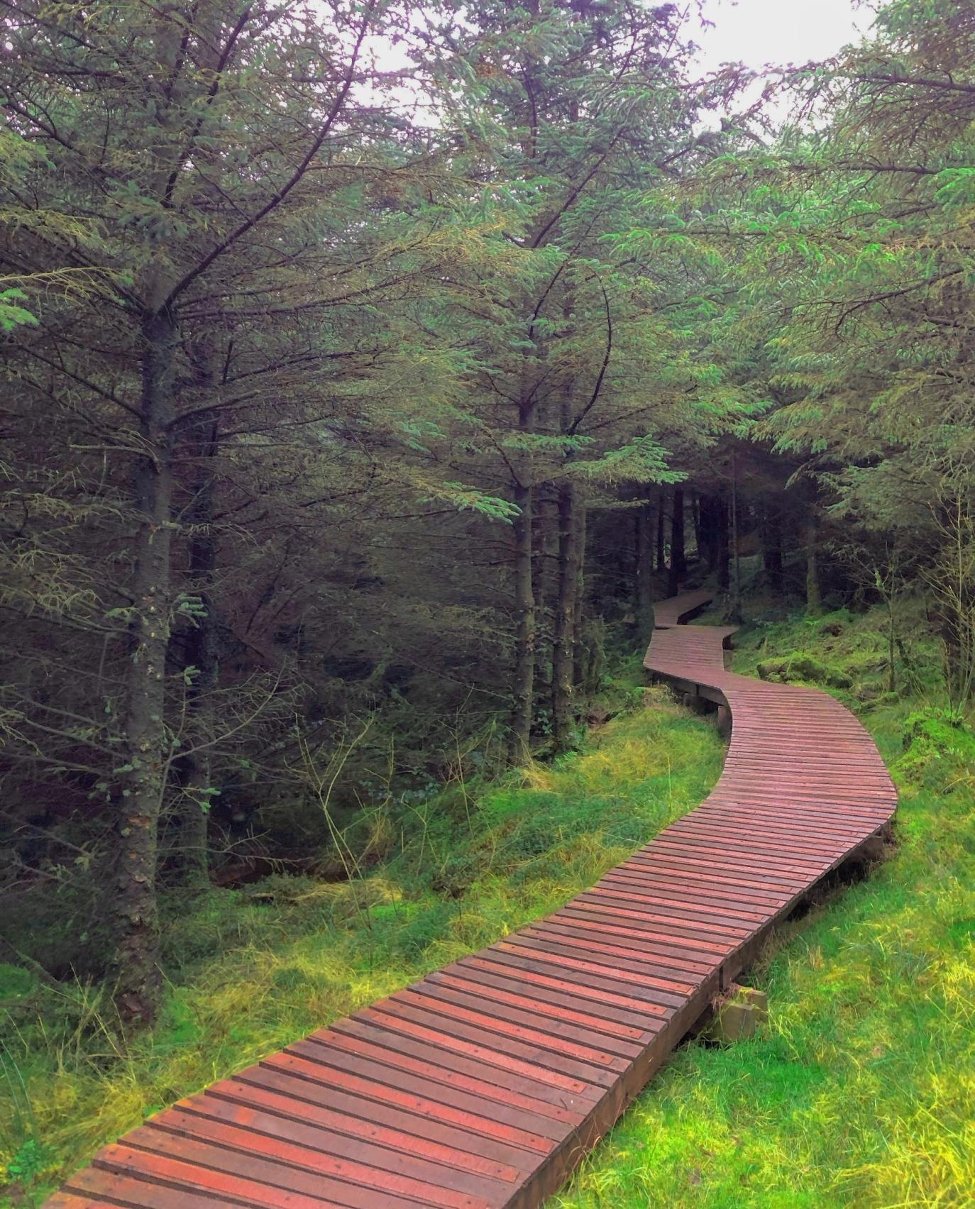 ROSTREVOR FOREST -