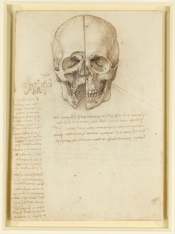 The Skull Sectioned (1489)    Royal Collection Trust/© Her Majesty Queen Elizabeth II 2018