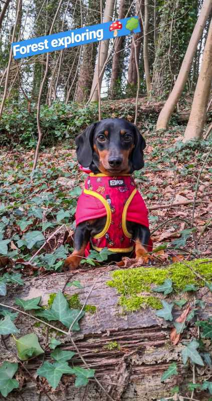 harlso-balancing-hound-northern-ireland3.jpg