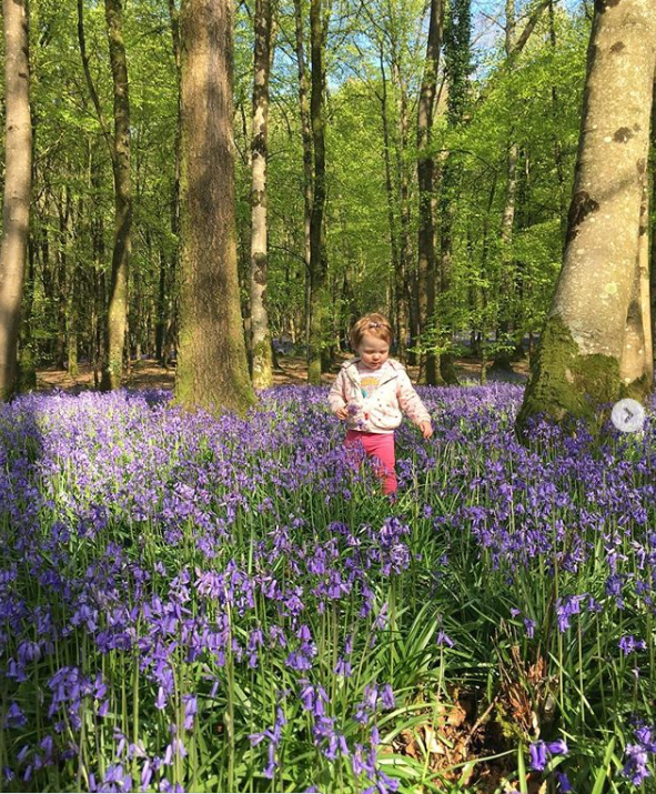 allyb.was.here-knockmanny-forest-park-bluebells.PNG