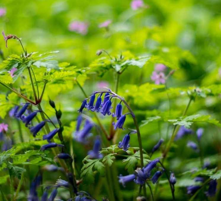 roe-valley-country-park-best-places-see-bluebells-northern-ireland6.jpg