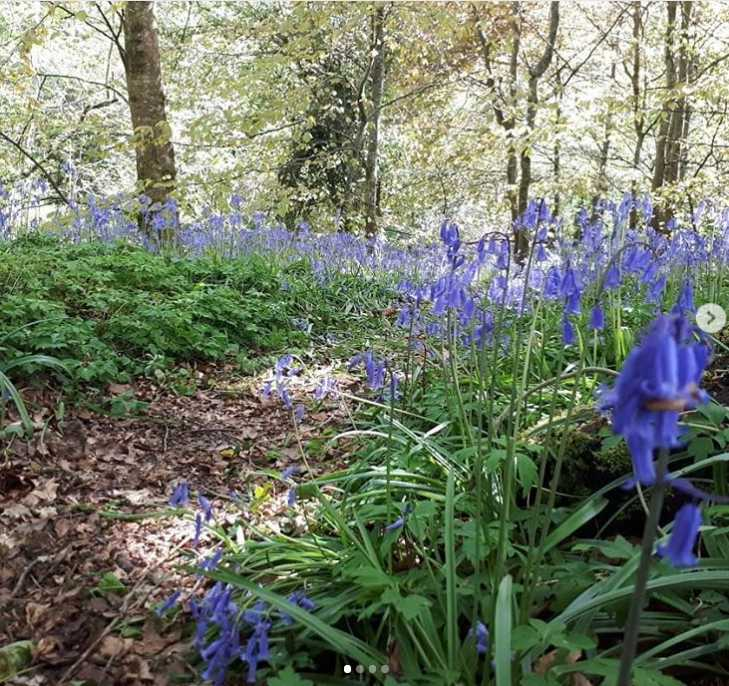 roe-valley-country-park-best-places-see-bluebells-northern-ireland8.jpg