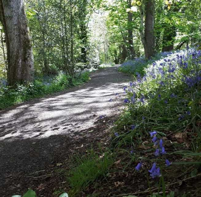 roe-valley-country-park-best-places-see-bluebells-northern-ireland9.jpg