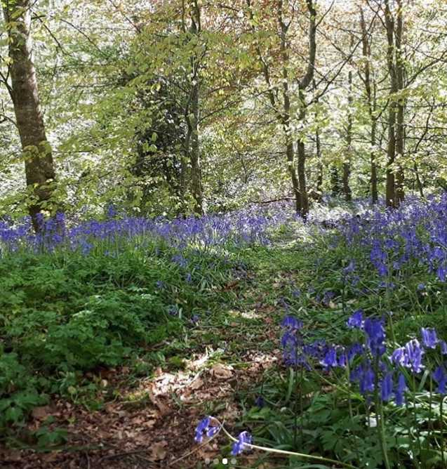 roe-valley-country-park-best-places-see-bluebells-northern-ireland10.jpg