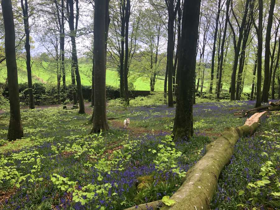 best-places-to-see-bluebells-northern-ireland2.jpg