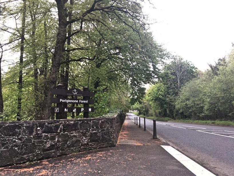 portglenone-forest-bluebells-northern-ireland9.jpg