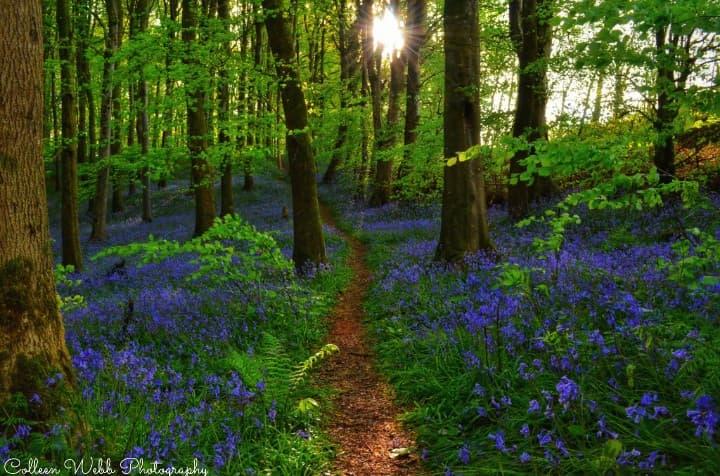 ni-explorer-fan-pics-portglenone-forest.jpg