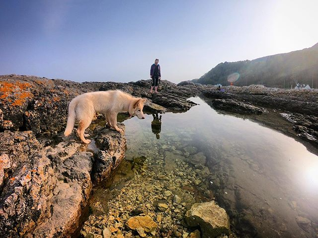 Exploring rock pools for big scary 🦀🦀🦀🦀 on the Causeway Coastal Route #NIEXPLORER 🔻 #roadtrip #adventures #coast #coastaldrive #northernireland #causeway #causewaycoast #causewaycoastalroute #coastaldrive #rockpool #rockpools #wildlife #dog #dogs #germanshepherd #germanshepherds #gsd #gsdpuppy #gsdpup #reflections