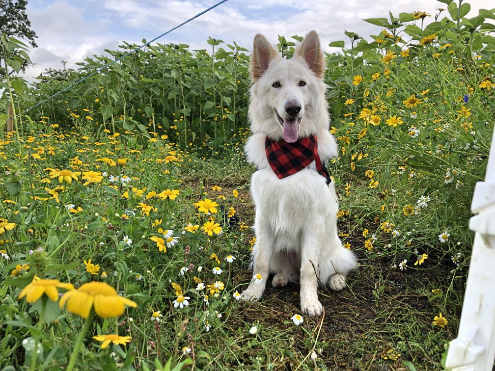 portglenone-sunflower-field-northern-ireland9.jpg