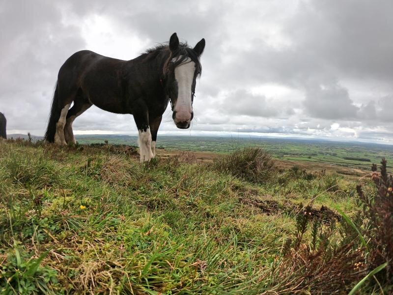 horse-riding-experience-sheans-horse-farm-armoy-northern-ireland5.jpg