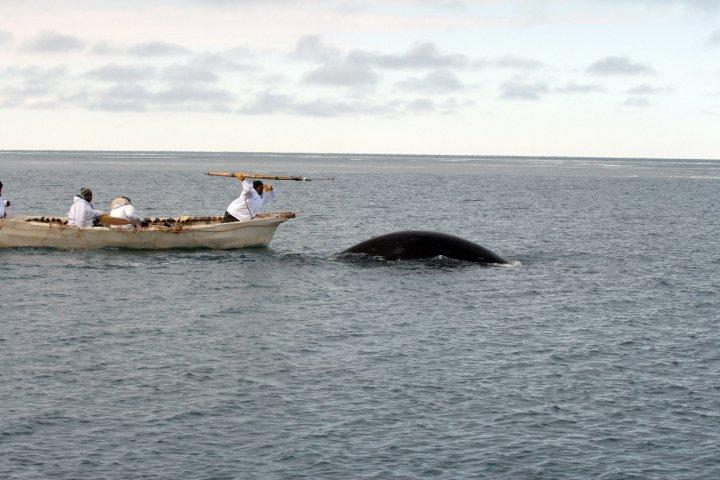 WhalingHarpoon