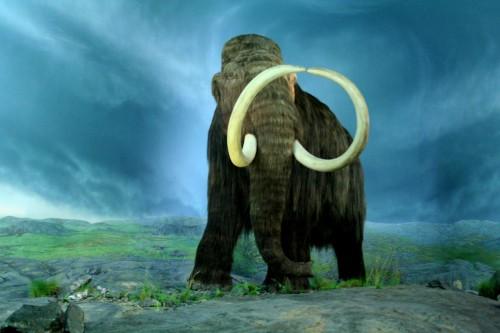 Wooly_Mammoth-RBC