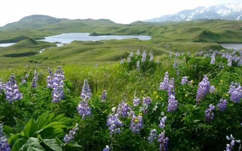 Heart Lake Adak